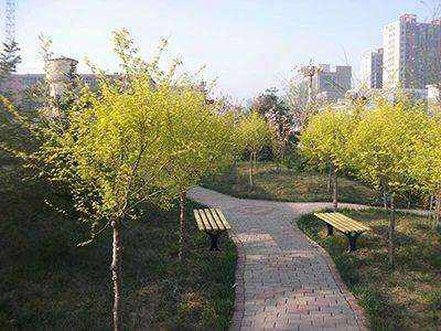 道路绿化能够创造丰富多彩的道路景观,利用树木自然柔和的曲线将