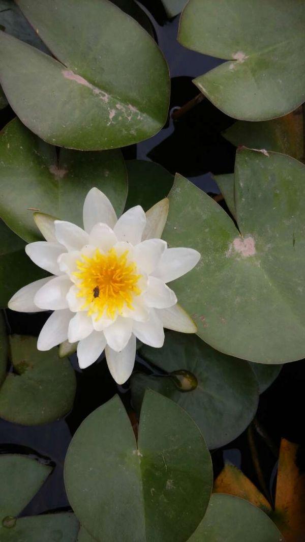 园林植物观赏池绿化