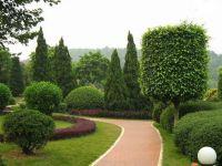 绿化能够保护环境