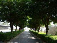 园林绿化树种
